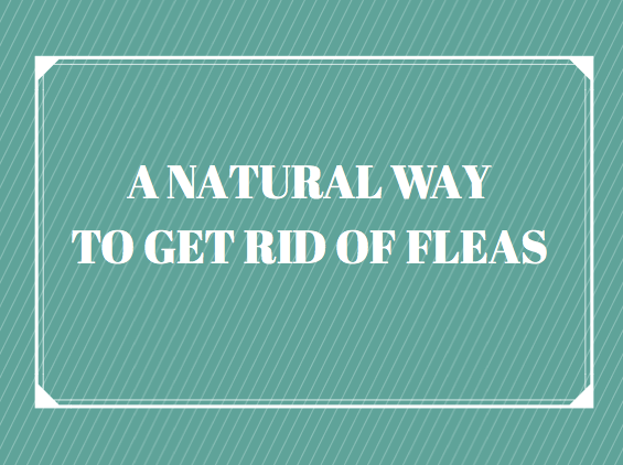 natural ways to kill fleas