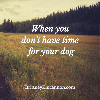 What to do when you dont have time for your dog