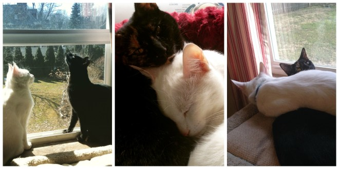 I'm limiting myself to three cute cat pictures, just three (today, at least)