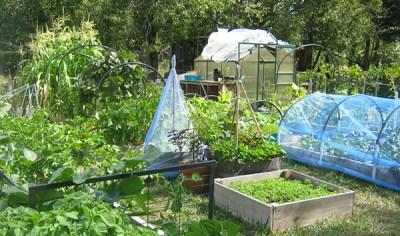 Vegetable Plants at Bruce Miller Nurseries