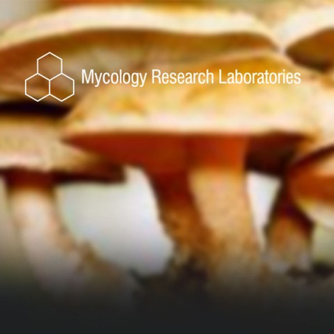 mycology-research-laboratories_btn