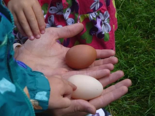double yoker egg