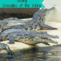 visiting crocodiles of the world