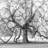 Baddesley Clinton mystery tree