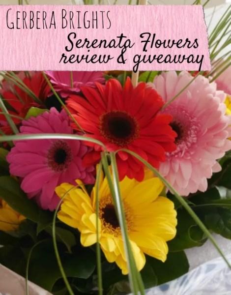 serenata flowers gerberas giveaway