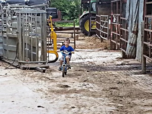 practising cycling in the farm yard