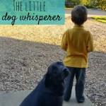 The little dog whisperer