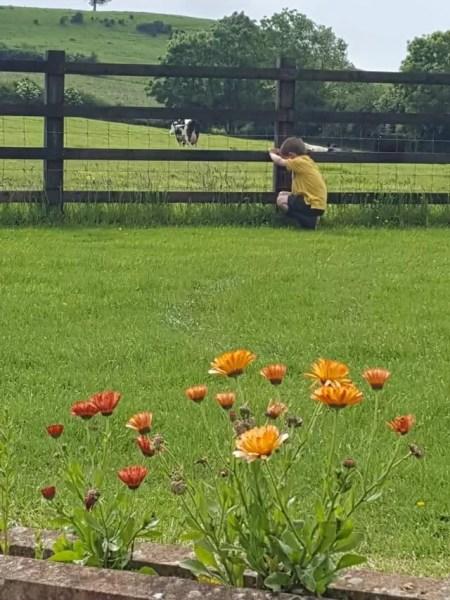 flowers and cutting the grass int he garden