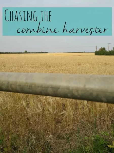 chasing the combine harvester