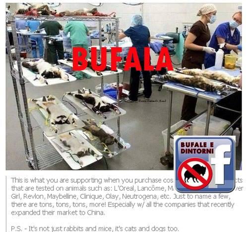 BUFALA - Produttori di cosmetici testano su animali.