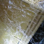 Cribellate-like snaring web, looking upward; SW Austin TX 78735 --- 10 Jul 2011