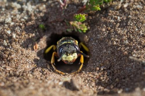 Medium Of How To Kill Ground Bees