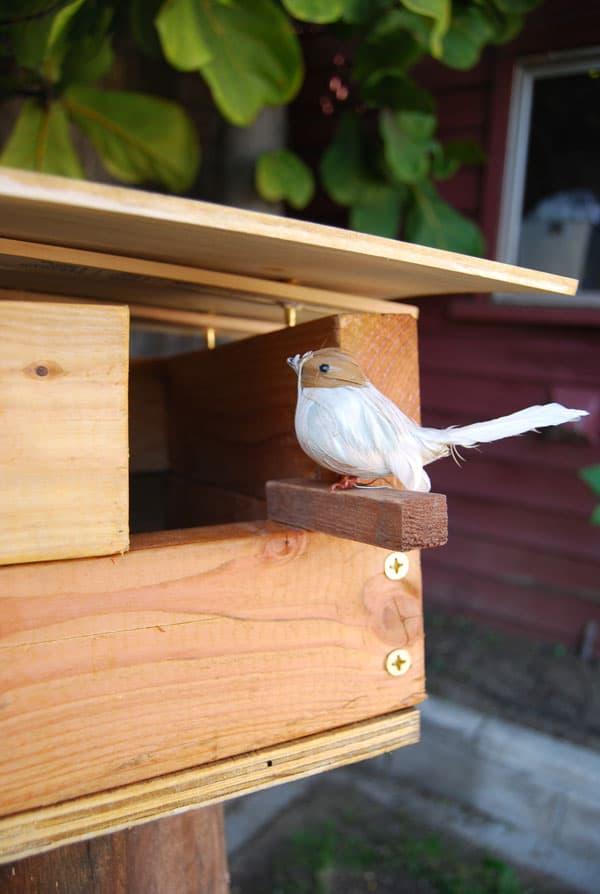bird-on-birdhouse