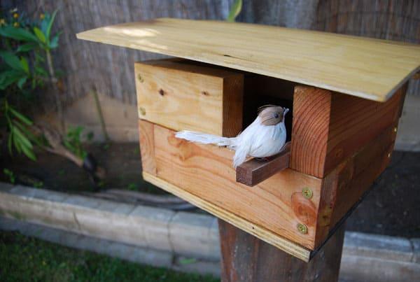birdhouse-bird-sitting