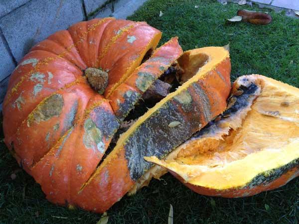 big-mac-pumpkin-cutting