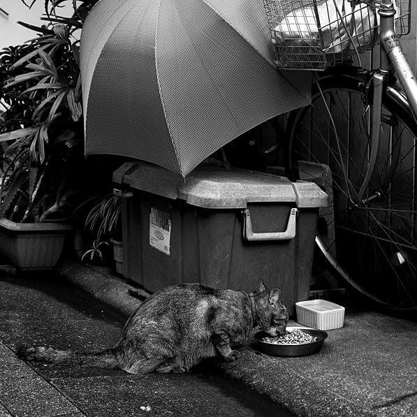 Exemple de Yoshinoya pour chats