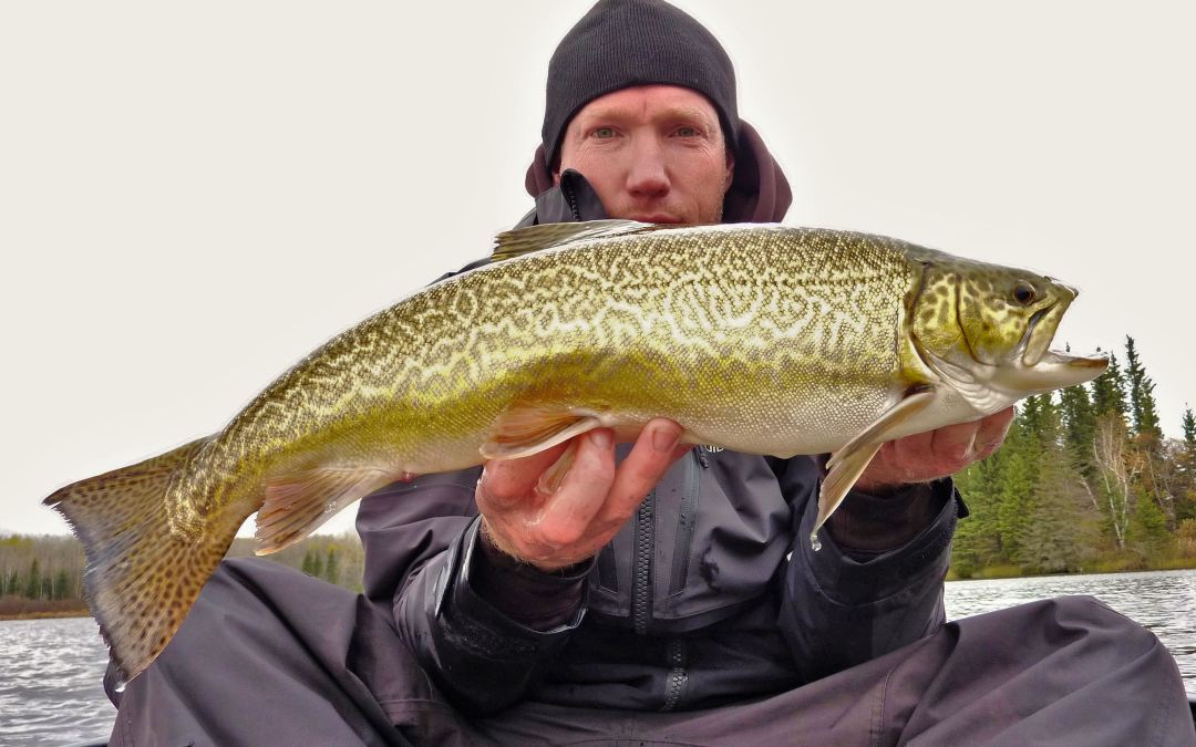 MANITOBA'S TROPHY TIGER TROUT… by Mikey.