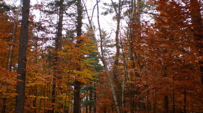 Foliage on Mt. Monadnock