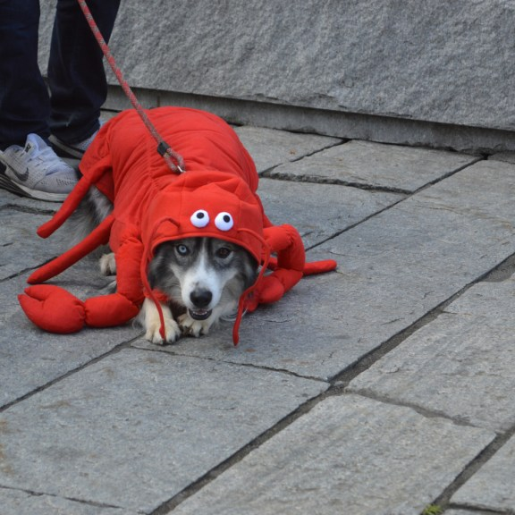 A lobster-inspired costume.