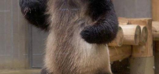 上野動物園のカンフー・パンダ