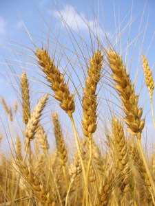 5 More Reasons to eat Whole Grains