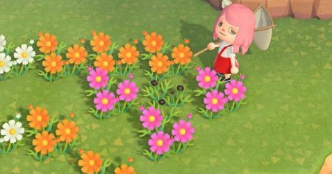 ない 咲か あつ あじさい 森