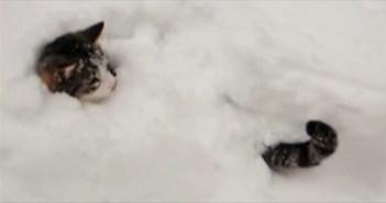 snowcat_R
