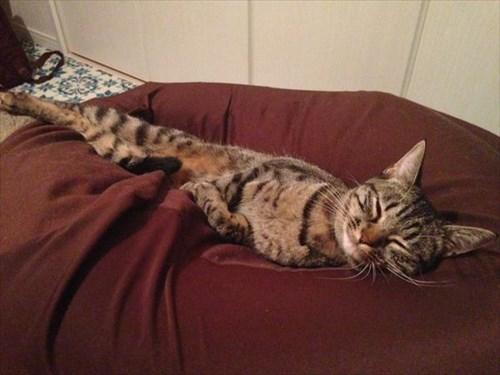 cat3_R