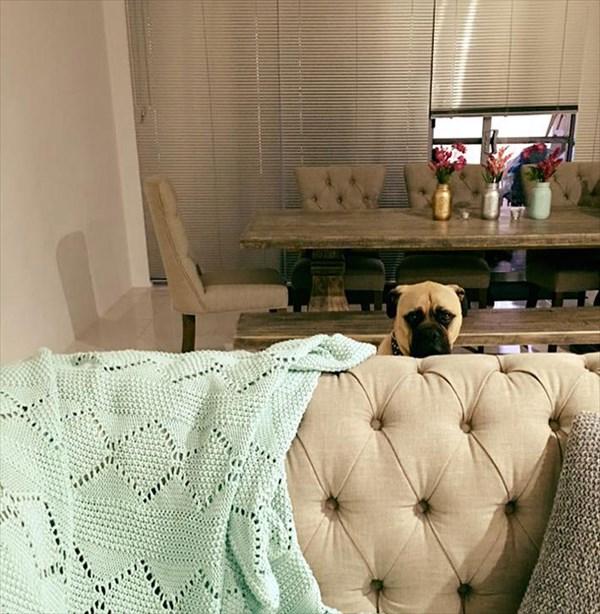 creepy-dog-stalks-owner-cyrus-bullmastiff-lauren-birney-26_R