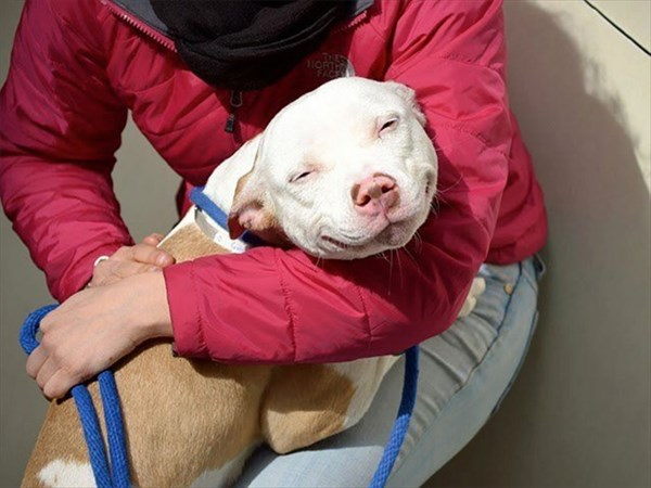 #1 Smiling Pup On Adoption Day_R