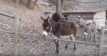 donkey_1_r
