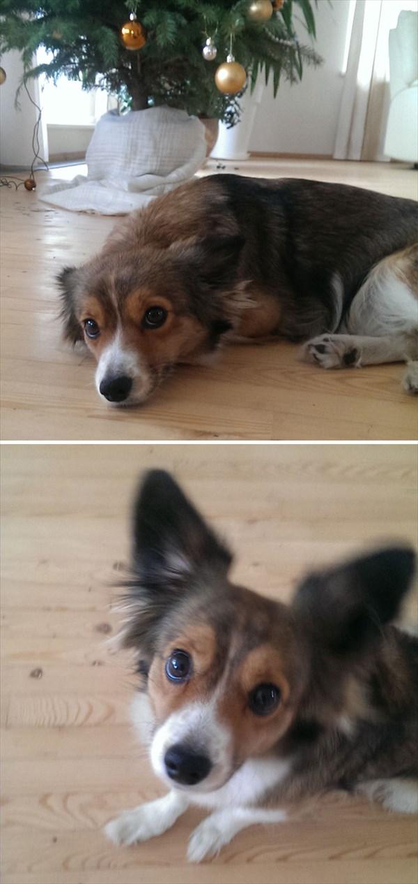 doggood-3_r