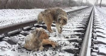 traindogs_r