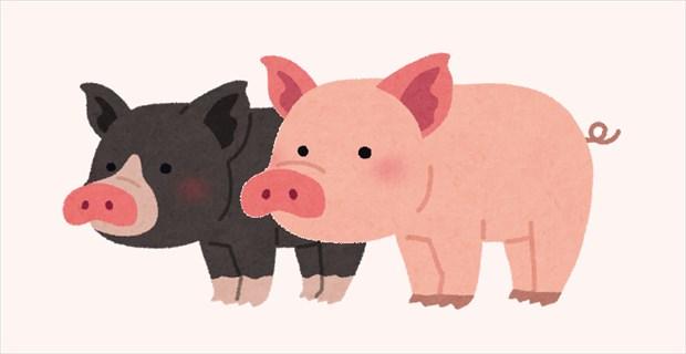 画像 「豚の夫婦が別れたらできるお菓子はなんだ?」→これは悔しい…(笑)