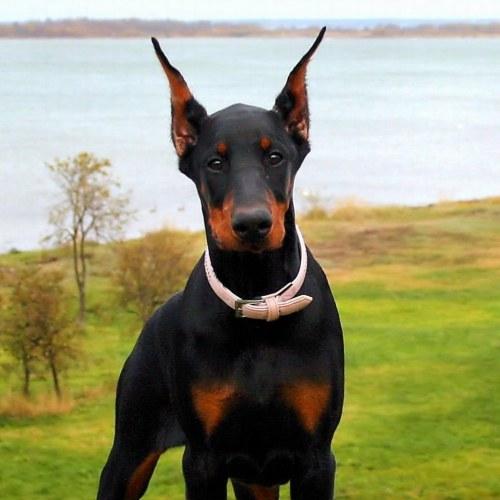 Medium Crop Of Black Dog Names