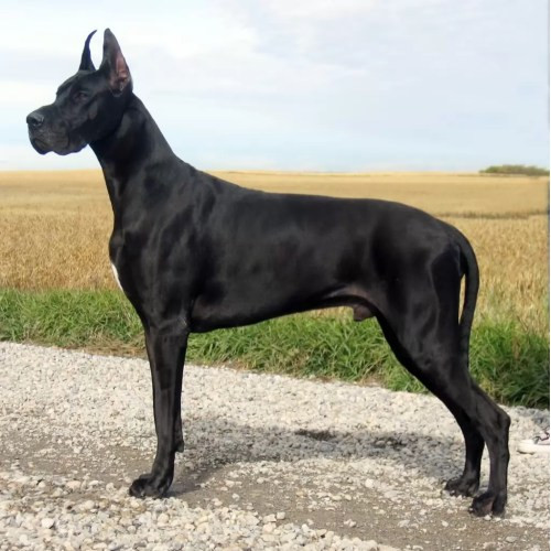 Medium Crop Of Names For Black Dogs