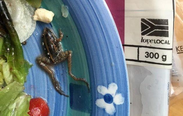 A dead frog found in Woolworths salad. Picture by: Dirk Steenekamp @Dirk_Steenekamp.