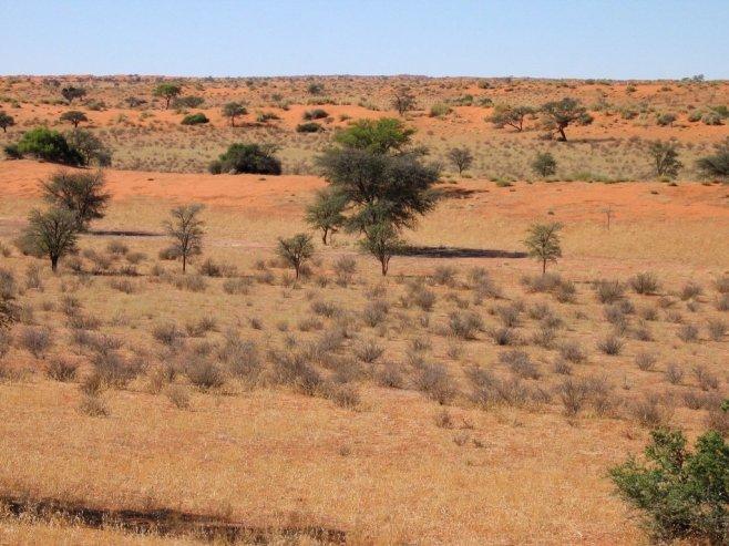 Kalahari Desert Facts