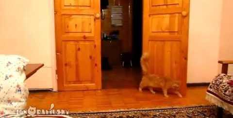 スーパーマリオのジャンプ音に驚いて飛び跳ねる猫