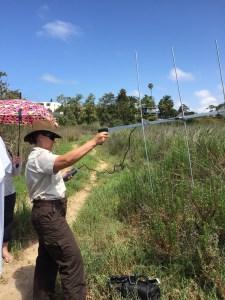 tracking the Ridgways Rails with radio telemetry
