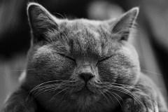 check-cat