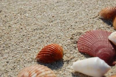 Sea Shells 4   Jumeirah, Dubai   Leonardo Aguiar   Flickr