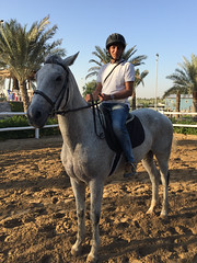 Hoch zu Pferd