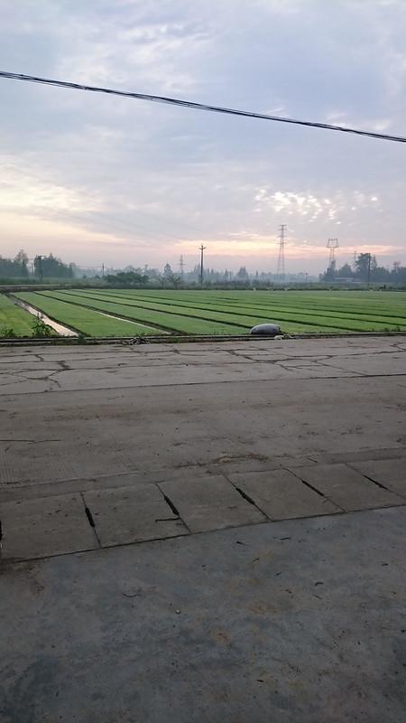 mike-nongcun-field