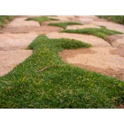 Small Crop Of Irish Moss Ground Cover