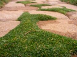 Small Of Irish Moss Ground Cover