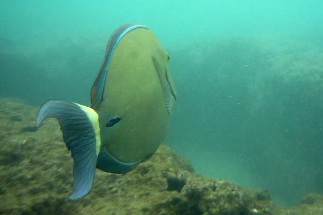 Tropical Fish Oahu Tropical Fish In Hanauma Bay Oahu