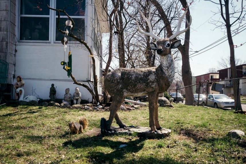 Wild Life - Ann Arbor, MI