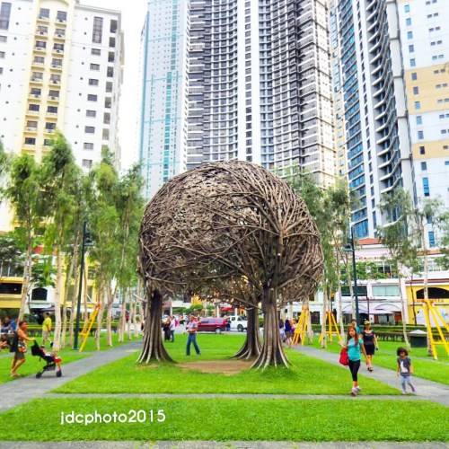 Medium Of The Tree Center