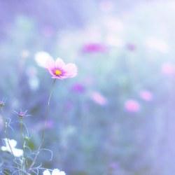 Pastel Flowers Emi Fujimoto Flickr